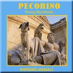 PECORINO POSING WORLDWIDE BY TONI ANZENBERGER