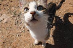 La mas timida y huraña <3 #photo #gato #campo #Pichasca #Chile