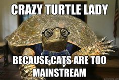 crazy turtle lady because cats are too mainstream