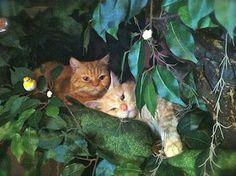 Adorable Kitties in Singapore