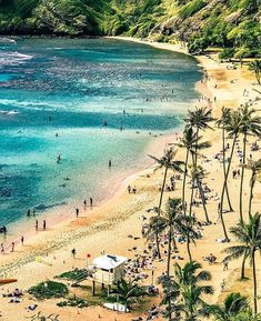 The beaches in Hawaii are some of the best in the world. The beaches around Hawaii are home to some of the best surfing, snorkeling, and swimming. Go Hawaii, Visit Hawaii, Hawaii Life, Big Island Hawaii, Hawaii Travel, Travel Usa, Trip To Maui, Beach Trip, Family Vacation Spots