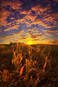 A Place You Call Home by Phil Koch on 500px