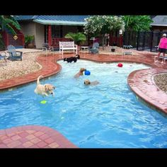 Julington Creek Animal Walk Privately Owned 7 acre dog resort in Jacksonville, Florida.  Party on!