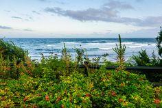 """""""Roadside"""" - on the back shore near Brace's Cover in Gloucester, Massachusetts"""