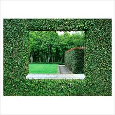 GAP Photos - Garden & Plant Picture Library - Hedge 'window'. Ficus, Photinia. - GAP Photos - Specialising in horticultural photography