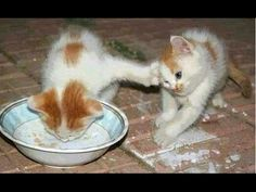 Funny Cats And Kittens Who Don't Want To Share Their Food Compilation [BEST OF] - YouTube