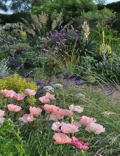 Beth Chatto's - Gravel Garden. Poppies, grasses, verbascum, yucca, salvia,