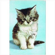 Kittens! Cats! 3 lovely postcards on eBid United Kingdom