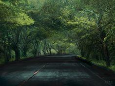#Carretera #verde #green #arboles #Ecuador