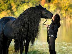 beautiful creature .... photo by Farzali