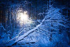 Fallen tree - Fallen tree.