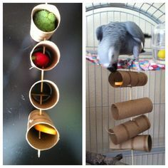 Enrichment using toilet paper tubes, to encourage foraging, chewing, and natural curiosity.