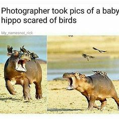 #Repost @turkey.fun.dip  Some of y'all look like baby hippos tbh.    #memes #jokes #funny #fuckschool #fucktrump #kms #like4like #l4l #likemyrecent #likeforspam #i #seem #desperate #for #likes #godhelpme # #f4follow #dipshit #yallugly #hoes # #like4follow #followforfollow #followtrain #followback #memesdaily #bestmemes #dankmemes #stoned