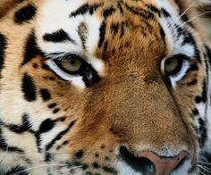 Resultado de imagen de fotos animales salvajes