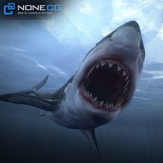 Great White Shark - NoneCG 3D Models, . NoneCG . on ArtStation at https://nonecg.artstation.com/projects/Xlv93