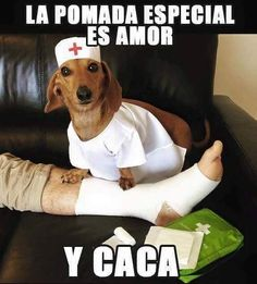 Doctor Dachshund preparing to operate Animal Quotes, Animal Memes, Funny Animals, Cute Animals, Dog Memes, Funny Memes, Hilarious, Funny Spanish Memes, Spanish Humor