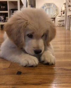 Super Cute Puppies, Cute Baby Dogs, Cute Little Puppies, Cute Dogs And Puppies, Cute Little Animals, Cute Funny Animals, I Love Dogs, Pet Dogs, Dog Cat