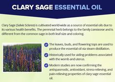 Very Helpful Essential Oil Menstrual Tips For essential oils menstrual cycle clary sage Clary Sage Essential Oil, Best Essential Oils, Hormonal Migraine, Essential Oil Menstrual Cramps, Natural Lifestyle, Oil Benefits, Diffuser Blends, Beauty Recipe, Diy Skin Care