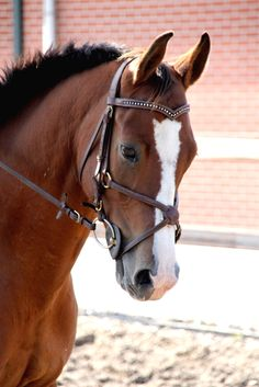 canter-commanche:  want this bridle omg