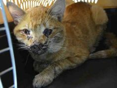 3 YRS OLD, MODERATE TO SEVERE DEHYDRATION, MOUTH BLEEDING, SKIN RASH, INJURIES BELOW CHIN LOWER JAW SWOLLEN, NEEDS URGENT MEDICAL!**SEVERE**