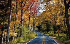 Skyline Drive through the foliage at Shenandoah National Park, VA Parc National, National Parks, Best Places To Travel, Places To Visit, Inspiration Entrepreneur, Fall Vacations, Shenandoah National Park, Shenandoah Valley, Travel And Leisure