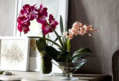 Our Ode to the Orchid