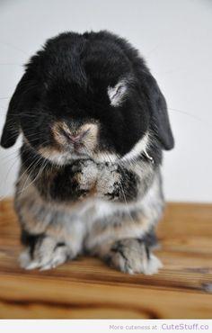 Loooove this bunny aaaaaaawwww