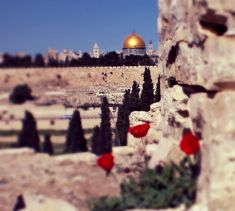 Qibat Al Sakhra Al - Musharaffa, Al Quds, Falasteen Beautiful Scenery, Beautiful Places, Israel, Palestine Art, Dome Of The Rock, Disney Phone Wallpaper, Holy Land, Jerusalem, Monument Valley