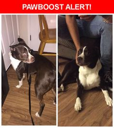 Is this your lost pet? Found in Sacramento, CA 95825. Please spread the word so we can find the owner!    Near Fulton Ave & Wittkop Way