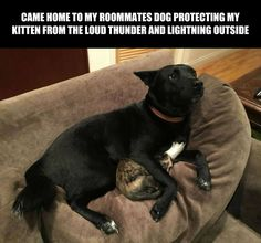 Thunder buddies for life. Dog Comforts Scared Cat During Thunderstorm Cute Funny Animals, Funny Dogs, Cute Dogs, Love My Dog, Animals And Pets, Baby Animals, Fluffy Animals, Scared Cat, Animals Beautiful