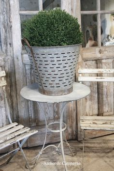 Olive Colander with Boxwood
