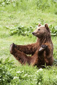 A bear enjoying the sunshine. Click to view: 25 Animals Who Are Stoked For Summer!