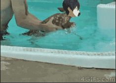 free iwatobi swim club | Tumblr ~ Must I describe?