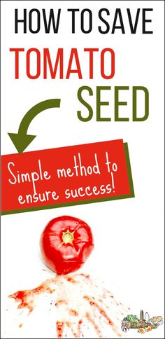 How to Save Heirloom Tomato Seeds l Simple tutorial to ferment tomato seeds for healthy seed saving l Homestead Lady.com #seedsaving #gardening #homesteading #homesteadhomeschool #homesteadlady Heirloom Tomato Seeds, Heirloom Tomatoes, Gardening For Beginners, Gardening Tips, Organic Gardening, Growing Herbs, Growing Vegetables, Natural Pesticides, Healthy Seeds