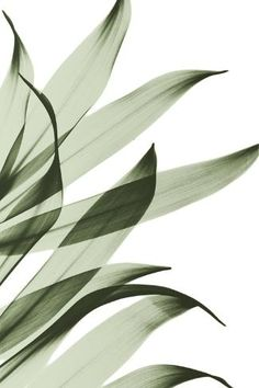 - Photographic Print: Song of India by Albert Koetsier : Pop Art Wallpaper, Pattern Wallpaper, Wallpaper Backgrounds, Digital Backgrounds, Plant Aesthetic, Beige Aesthetic, Aesthetic Iphone Wallpaper, Aesthetic Wallpapers, Fond Design