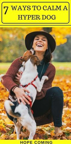Pet Training - How to calm a Hyper Dog | Interesting fact: Over excited Dogs are capable of learning much more | Puppy training basics | puppy training tips | via Kaufmanns Puppy Training This article help us to teach our dogs to bite just exactly the things that he needs to bite #doghelp #puppytrainingtips