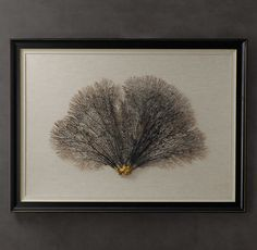 Inspiration for seasonal frames. (Preserved Sea Fan With Ivory Mat) #restorationhardware