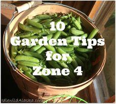 10 Garden Tips for Zone 4 - IdlewildAlaska