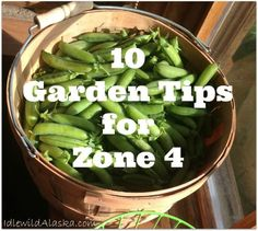 10 Garden Tips for Zone 4 - IdlewildAlaska