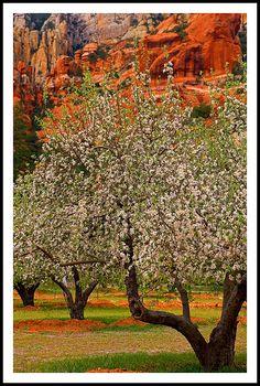 Oak Creek Canyon . Arizona