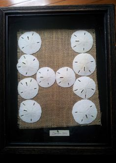 "Sand dollar Shadowbox~ My first ""pin"". Shape them into the first letter of your last name. This is what I finally decided to do with our Destin sand dollars:)"