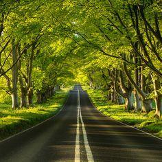 Beech Avenue ~ Dorset , England. Photo by Paul Wynn-Mackenzie
