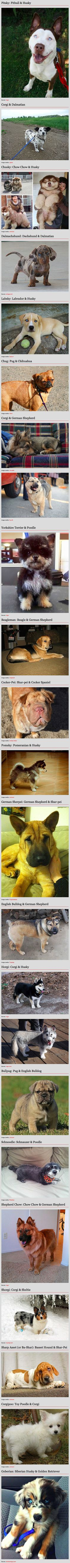 Dogs are probably one of the most diverse-looking species on the planet. Thousands of years of breeding has created a wide range of distinctive breeds with drastically different colors, coats, sizes and shapes. But what happens when you take some of these distinctive breeds and combine their most notable properties? You get dogs like these adorable cuties, who combine the best of both of their breeds.