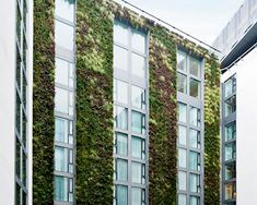 """been here and this is just one of the many  """"living walls"""" at the tower of london mint hotel.  awesome."""