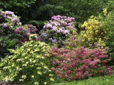 Yard, Plants, Patio, Plant, Courtyards, Garden, Planets, Court Yard