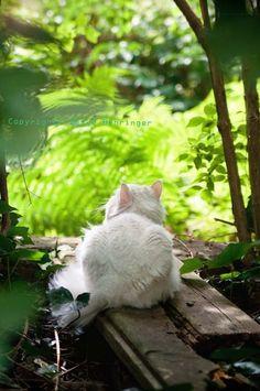 "Cat: ""I'm just bird-watching..."""