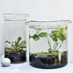 Get some underwater plants from a pet store, some large inexpensive vases and voila, you have an adorable (low maintenance! I really love this idea for a desk plant at work. For added fun, get a plant that will flower & add a fish? Indoor Pond, Indoor Water Garden, Indoor Plants, Water Gardens, Small Gardens, Indoor Gardening, Air Plants, Bio Garden, Garden Plants