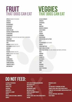What you can and cannot feed your furbaby