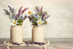 HOBBIES & CRAFTS & FLEEMARKET: FREE ARTICLE........HOW YOU CAN PRESERVE CUT FLOWE...