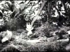 POGLES WOOD Honey Bees 21 April 1966 - YouTube